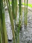 air cerah